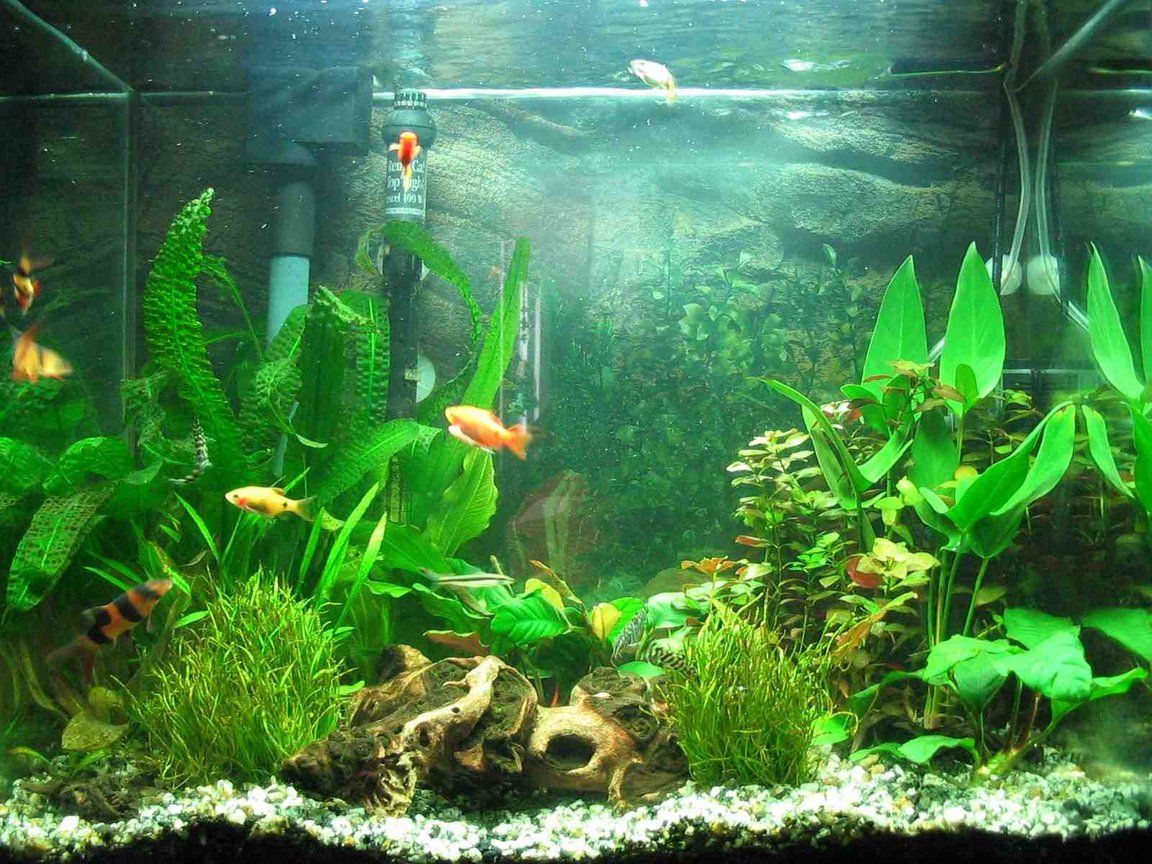 25 gallons planted tank (mostly live plants and fish) - Planted 25g tall 2x36 watt pc flourecent = 72 watt total co2 injection (homemade-yeast generated) (still adjusting setup to obtain optimal levels) substrate: eco-complete w/ gravel newly planted and not-totaly established yet