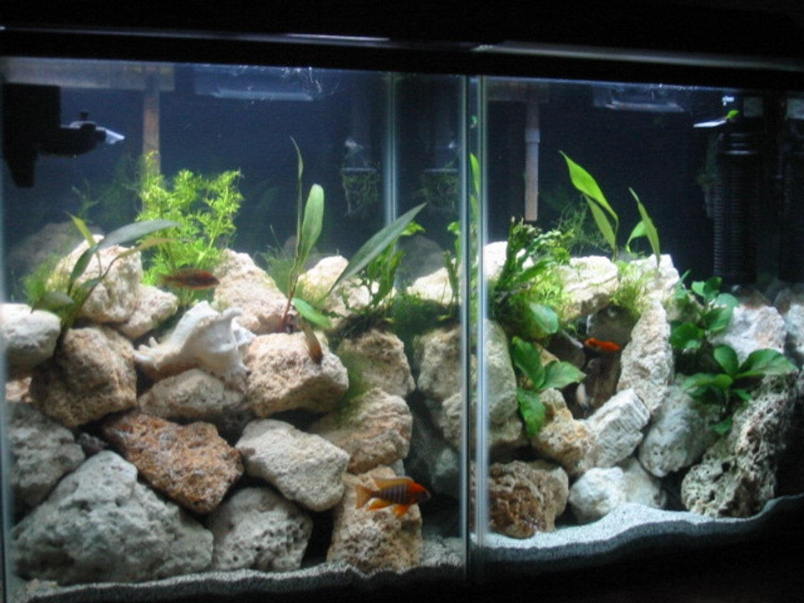 40 gallons planted tank (mostly live plants and fish) - High noon