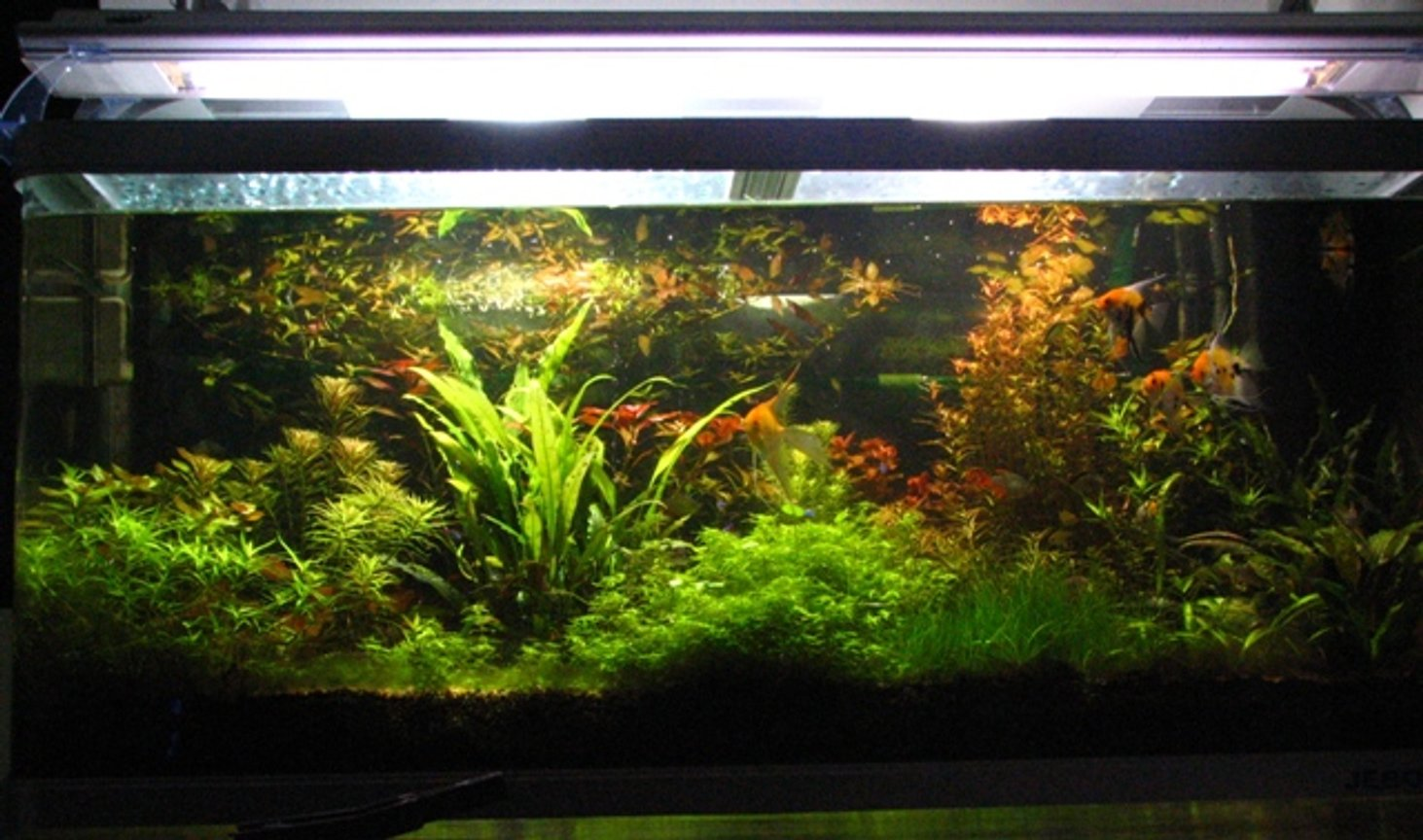 100 gallons planted tank (mostly live plants and fish) - Jebo 5oo litre tank 50cm by 50cm by 60cm Lighting: 2 HQI 150W 5400K + 2 times 36W Interpet triton Substrate: Fondo Vivo Prodac inyternational + humus + humus plus Filtration: Eheim 2260 cannister pressurised co2 4 kg Fertiliser: Tropica master grow + PMDD