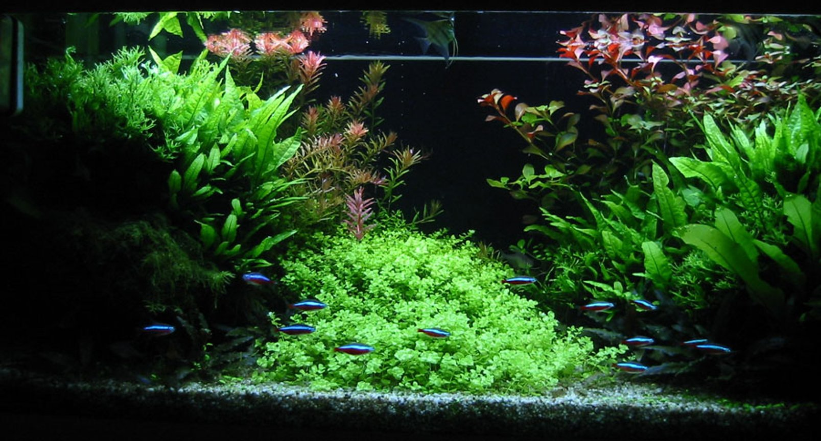 47 gallons planted tank (mostly live plants and fish) - Front view of my 180 liters tank