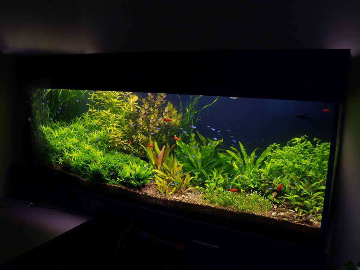 190 gallons planted tank (mostly live plants and fish) - aquarium update, it looks now. It is 4 month after set up.
