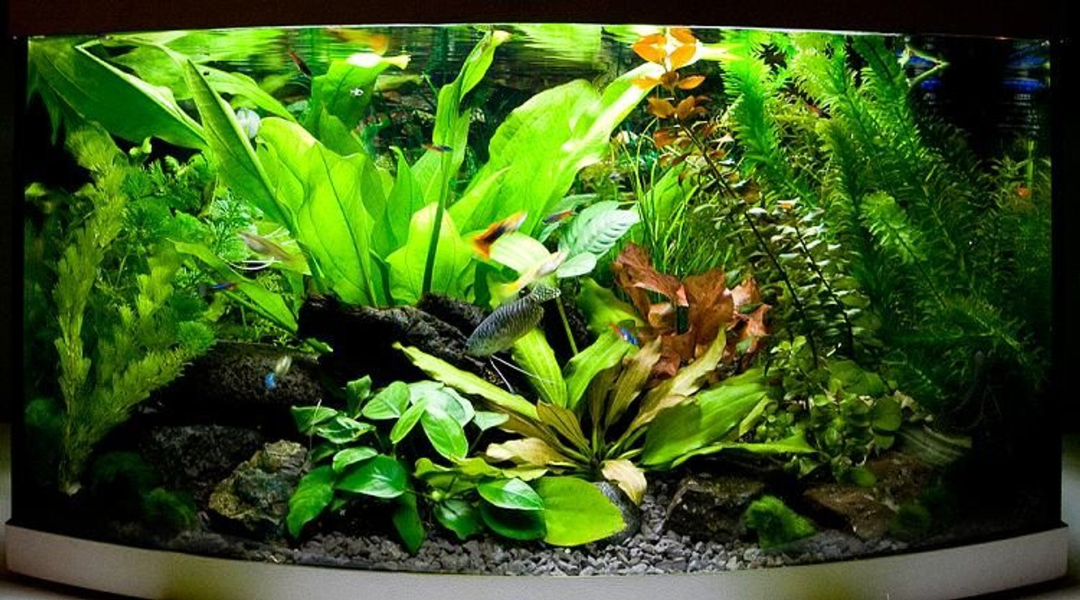 13 gallons planted tank (mostly live plants and fish) - my 60l tank