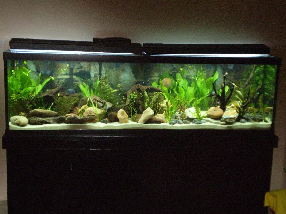 125 gallons planted tank (mostly live plants and fish) - 125 Gallon freshwater planted Tetra tank