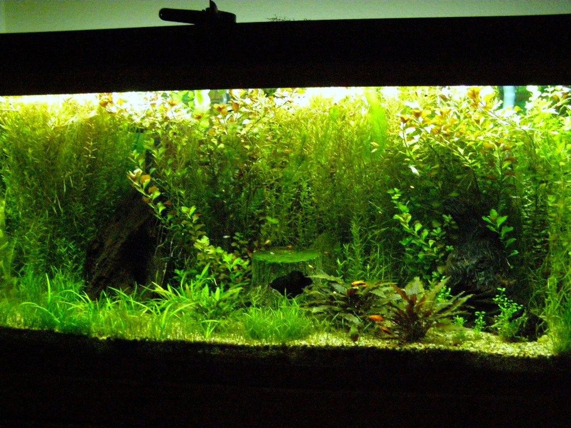 60 gallons planted tank (mostly live plants and fish) - Plant Tank