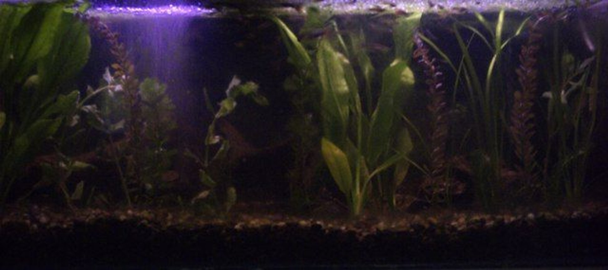 60 gallons planted tank (mostly live plants and fish) - My Big Tank. Tank#1