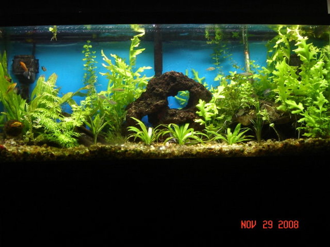 90 gallons planted tank (mostly live plants and fish) - all live plants, 11 weeks a long. still a work in progress. the rock pile has several tunnels and hiding spots, home made drift wood and two antique bottles.