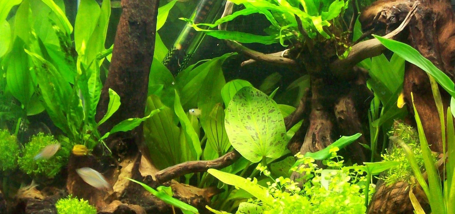 45 gallons planted tank (mostly live plants and fish) - 55 litre planted aquarium