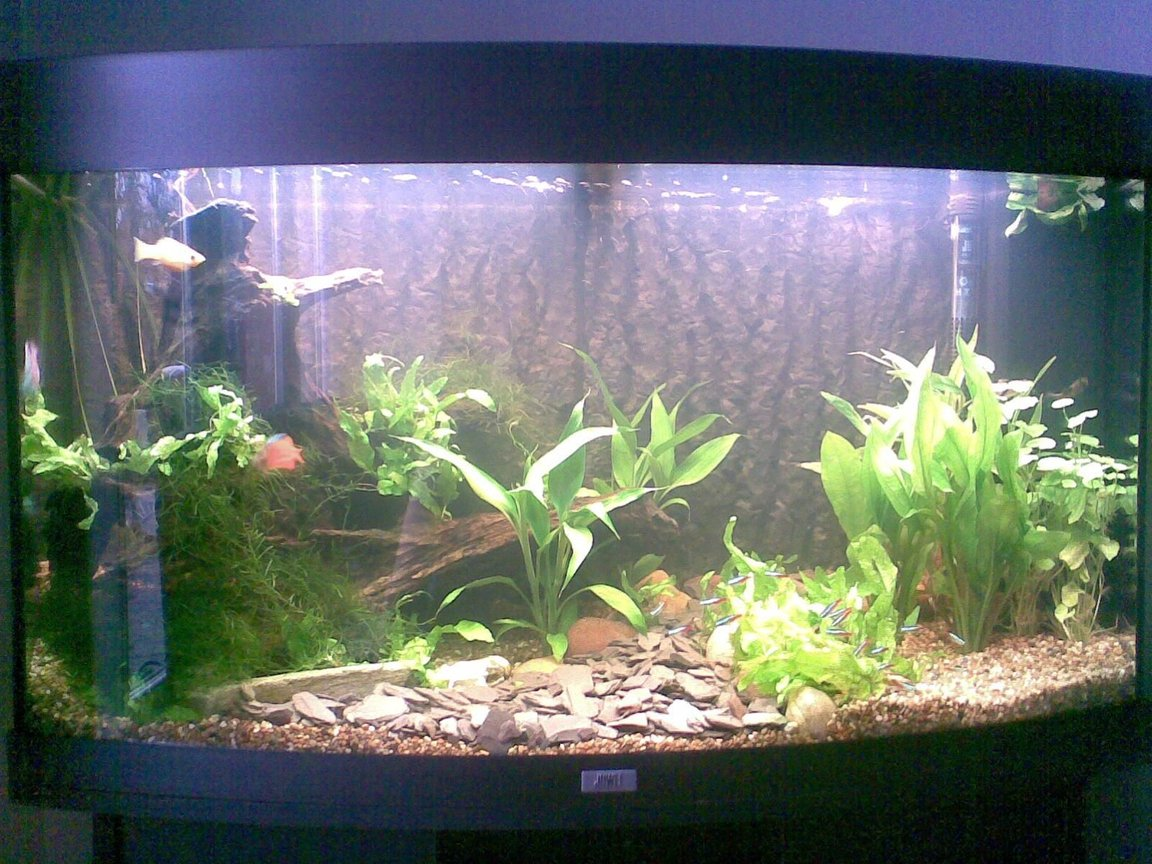 180 gallons planted tank (mostly live plants and fish) - Not the clearest of pictures, ill sort out a better one soon