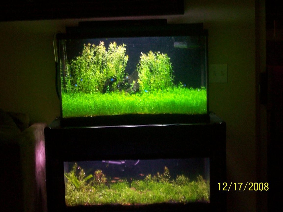 29 gallons planted tank (mostly live plants and fish) - planted fish tank aquarium by green aquarium
