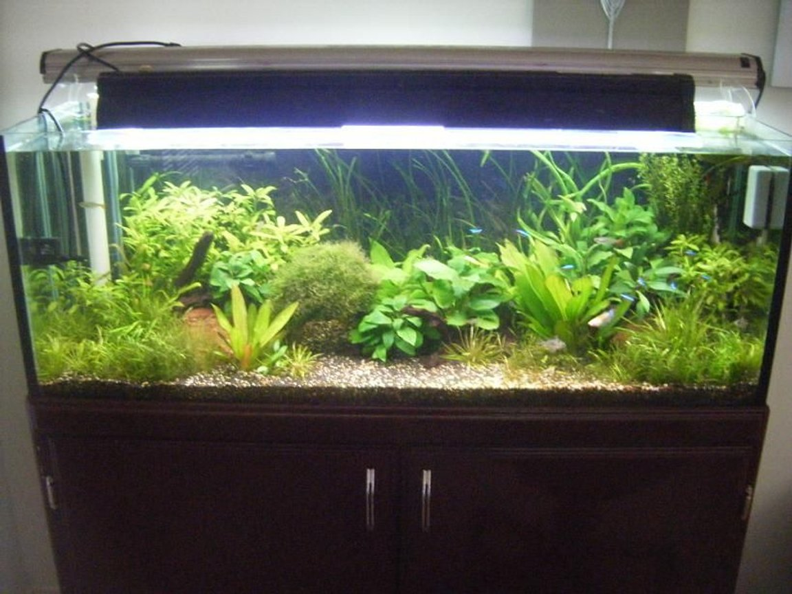 50 gallons planted tank (mostly live plants and fish) - update of my plant tank