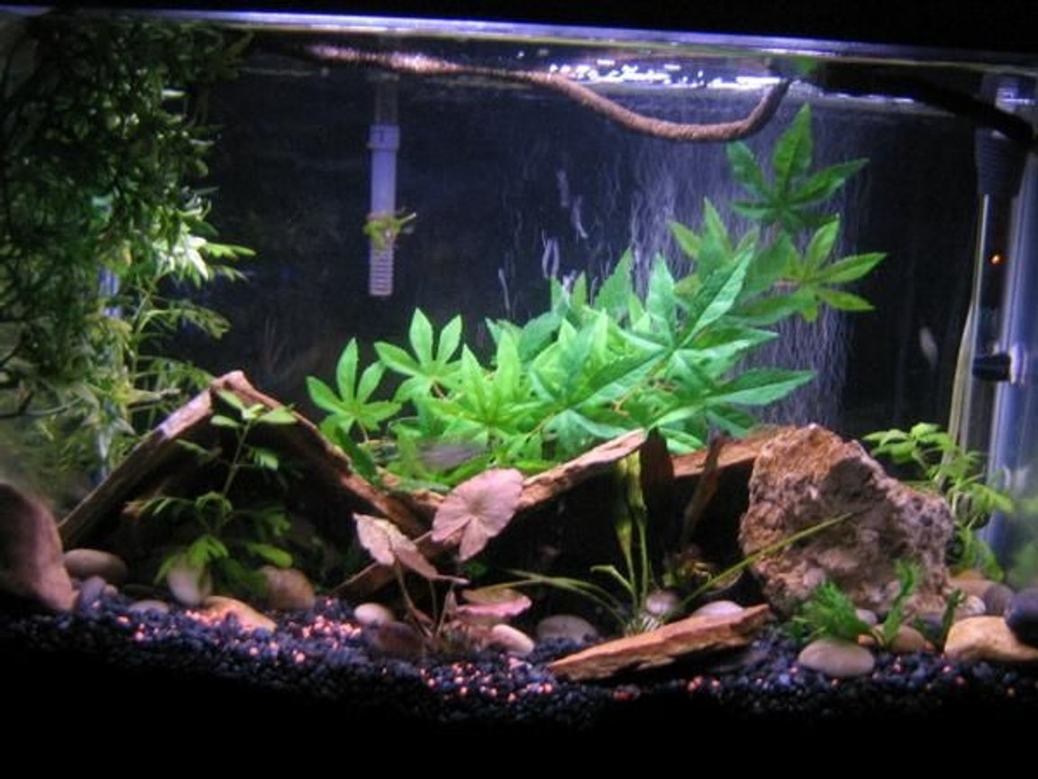 10 gallons planted tank (mostly live plants and fish) - all real plants except for the backround bush and left big bush