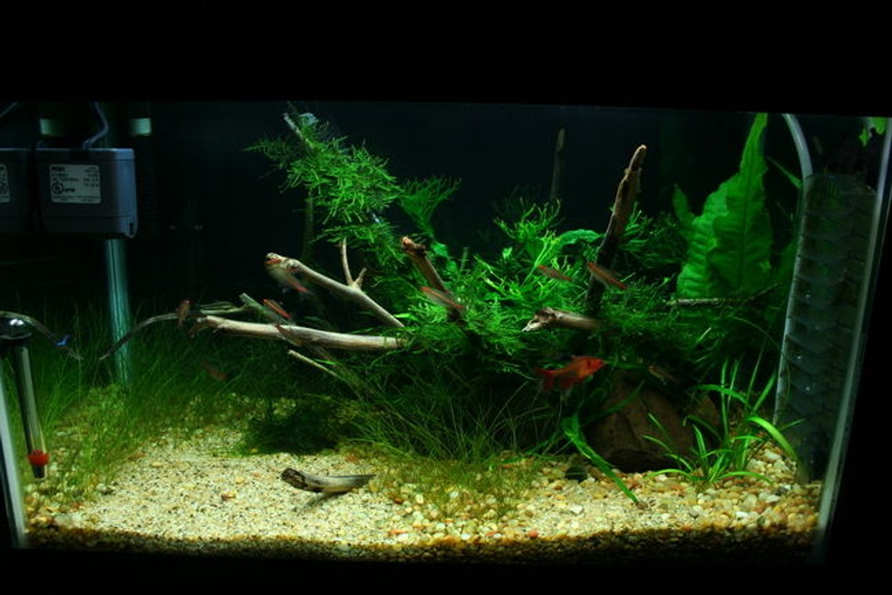 10 gallons planted tank (mostly live plants and fish) - few months of growth
