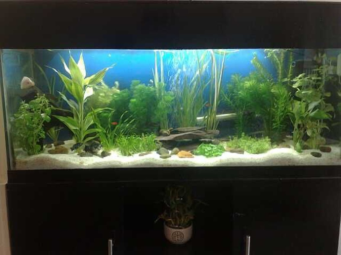 15 gallons planted tank (mostly live plants and fish) - Planted tank