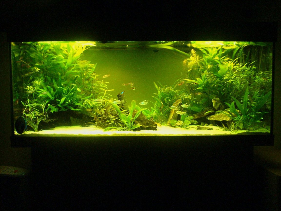 65 gallons planted tank (mostly live plants and fish) - Low tech 240l tank without CO2.