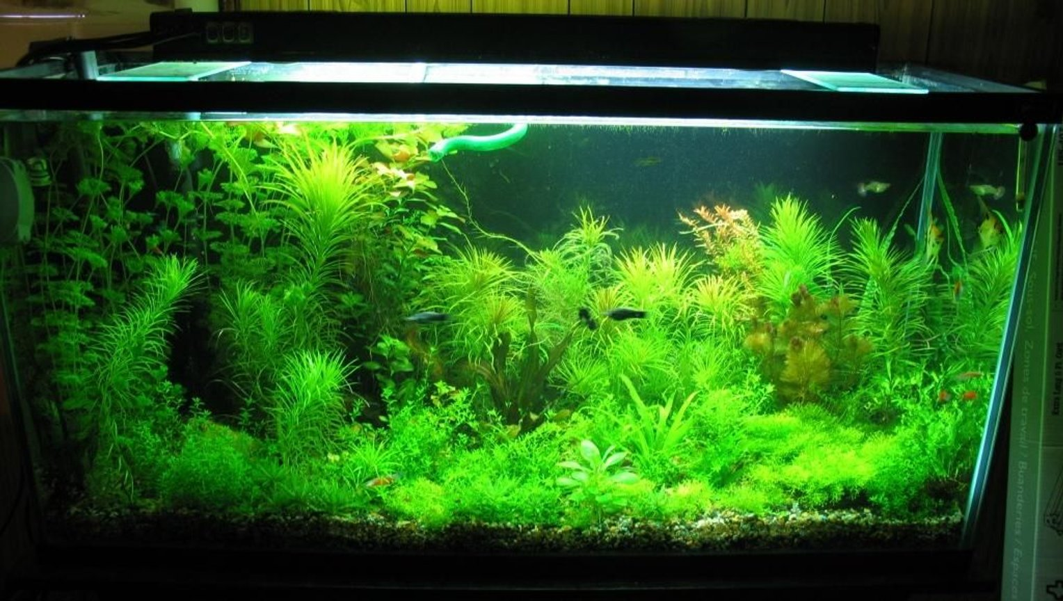 77 gallons planted tank (mostly live plants and fish) - 77 gallon , 2.5wpg, diy c02,