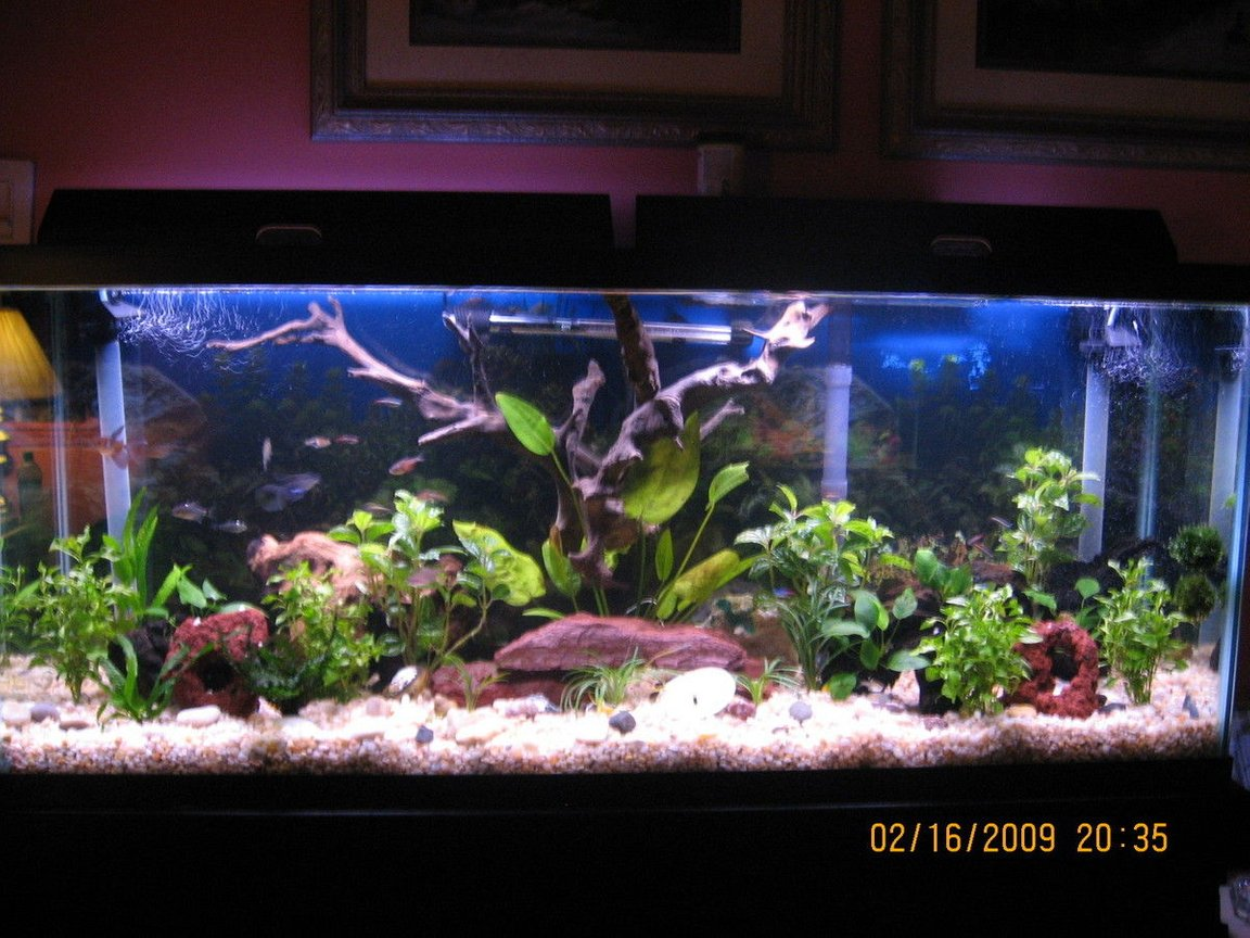 55 gallons planted tank (mostly live plants and fish) - 55 gallon planted with fish