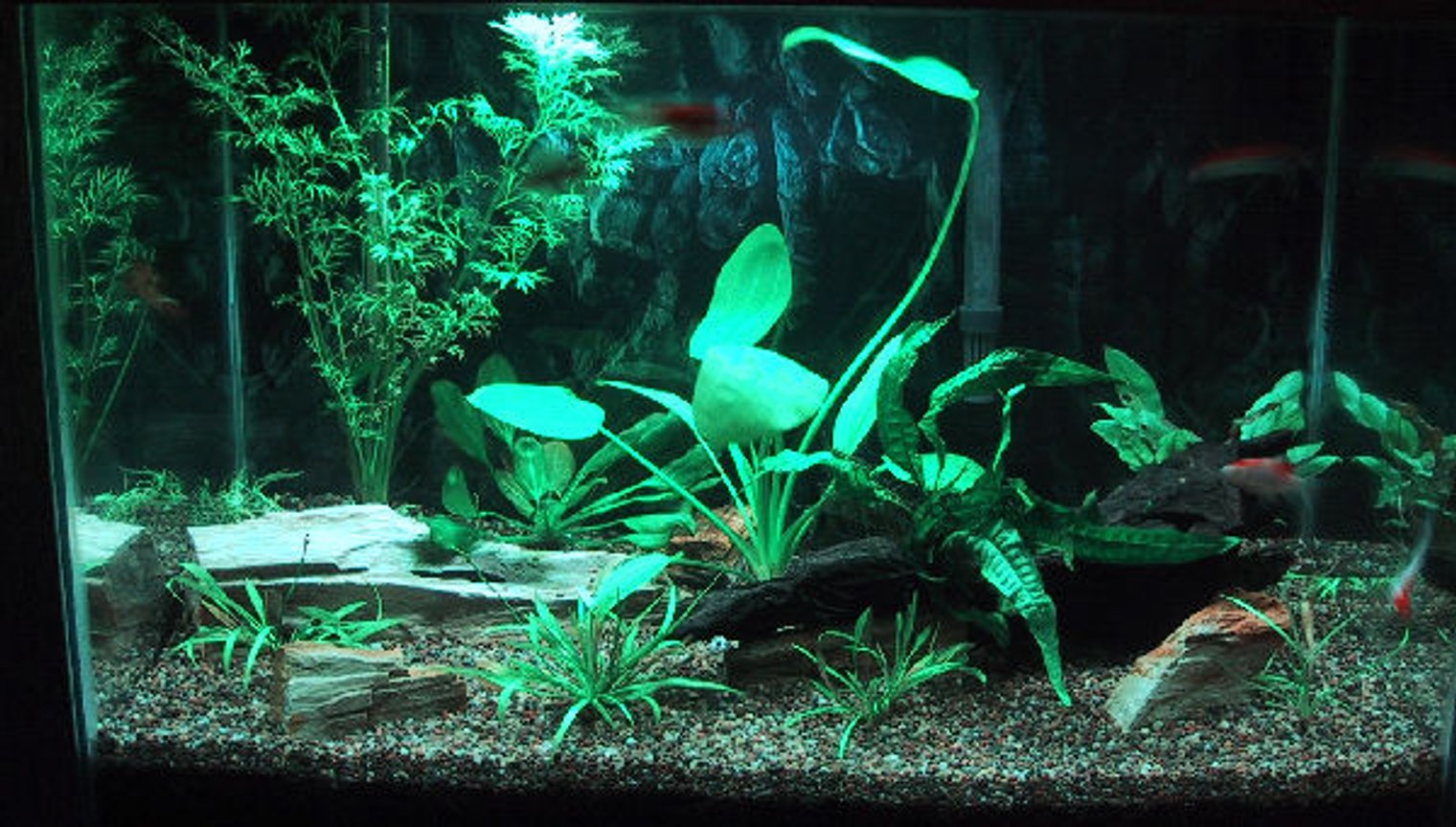 20 gallons planted tank (mostly live plants and fish) - 02-28-2009 - Updated picture with more plants and 6 goldfish being used to speed up cycling process.