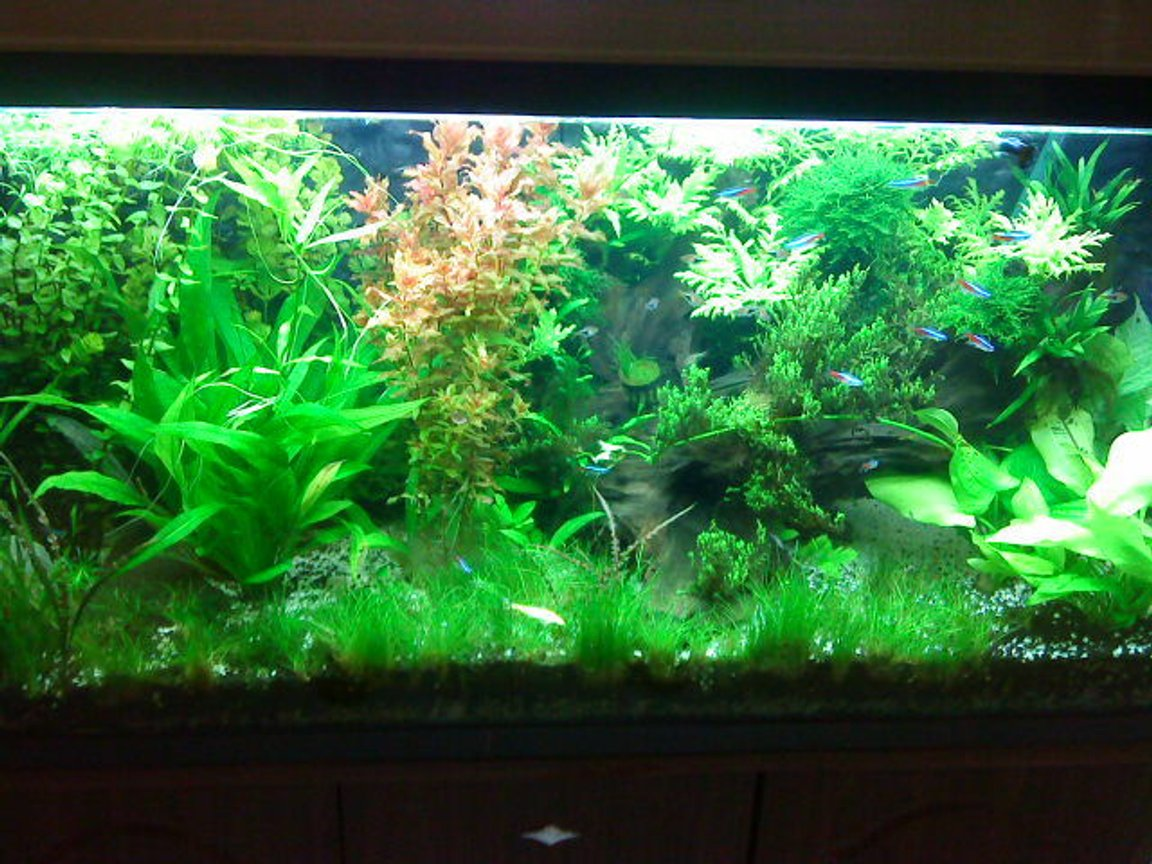 50 gallons planted tank (mostly live plants and fish) - update of my tank