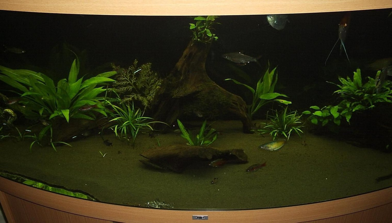 100 gallons planted tank (mostly live plants and fish) - Tank front view