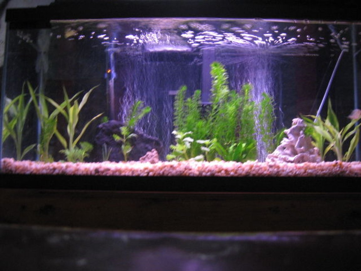 30 gallons planted tank (mostly live plants and fish) - 30 gallon piranha tank with some live plants