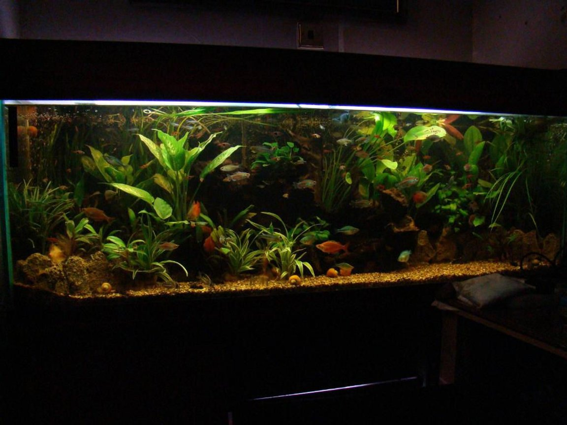 120 gallons planted tank (mostly live plants and fish) - one of my tanks