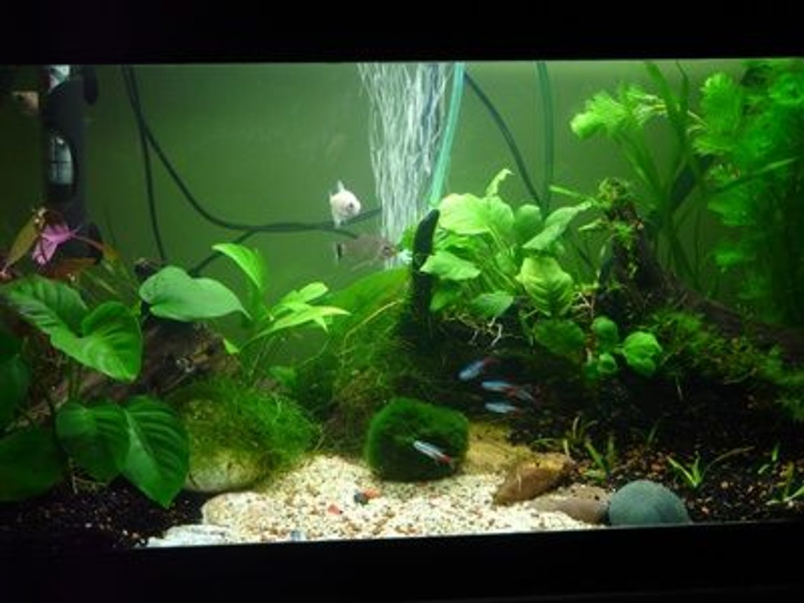 15 gallons planted tank (mostly live plants and fish) - 65x26x35(h) cm Planted Tank 15 W Day-Light 14.000 K