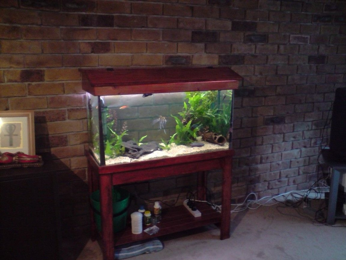 66 gallons planted tank (mostly live plants and fish) - community planted tank 2angels 3swordtails 2bristlenose catfish 1 male beta fighting fish