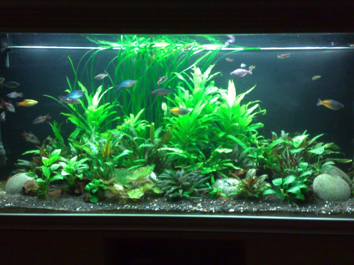 95 gallons planted tank (mostly live plants and fish) - 5 ft tank