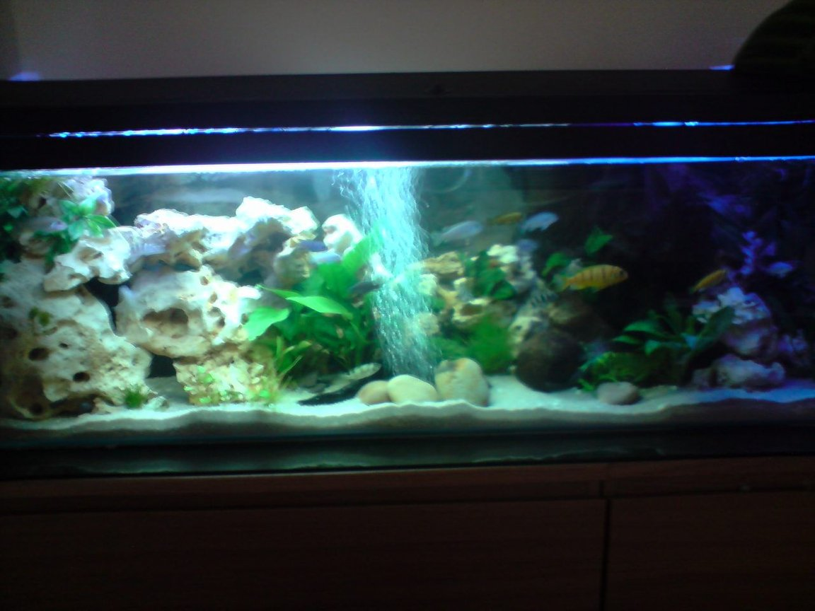 52 gallons planted tank (mostly live plants and fish) - malawi