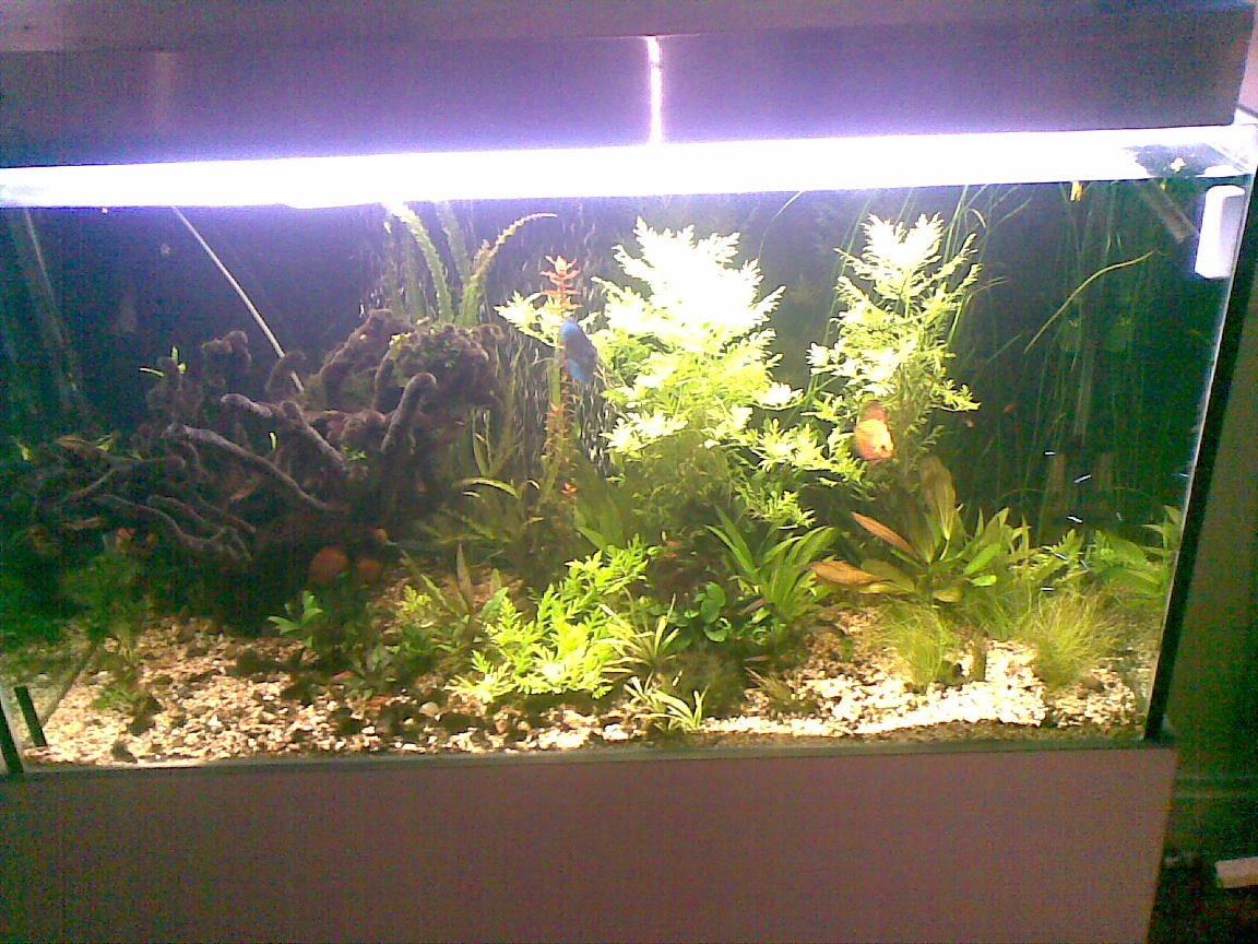 400 gallons planted tank (mostly live plants and fish) - plated discus tank 3 months