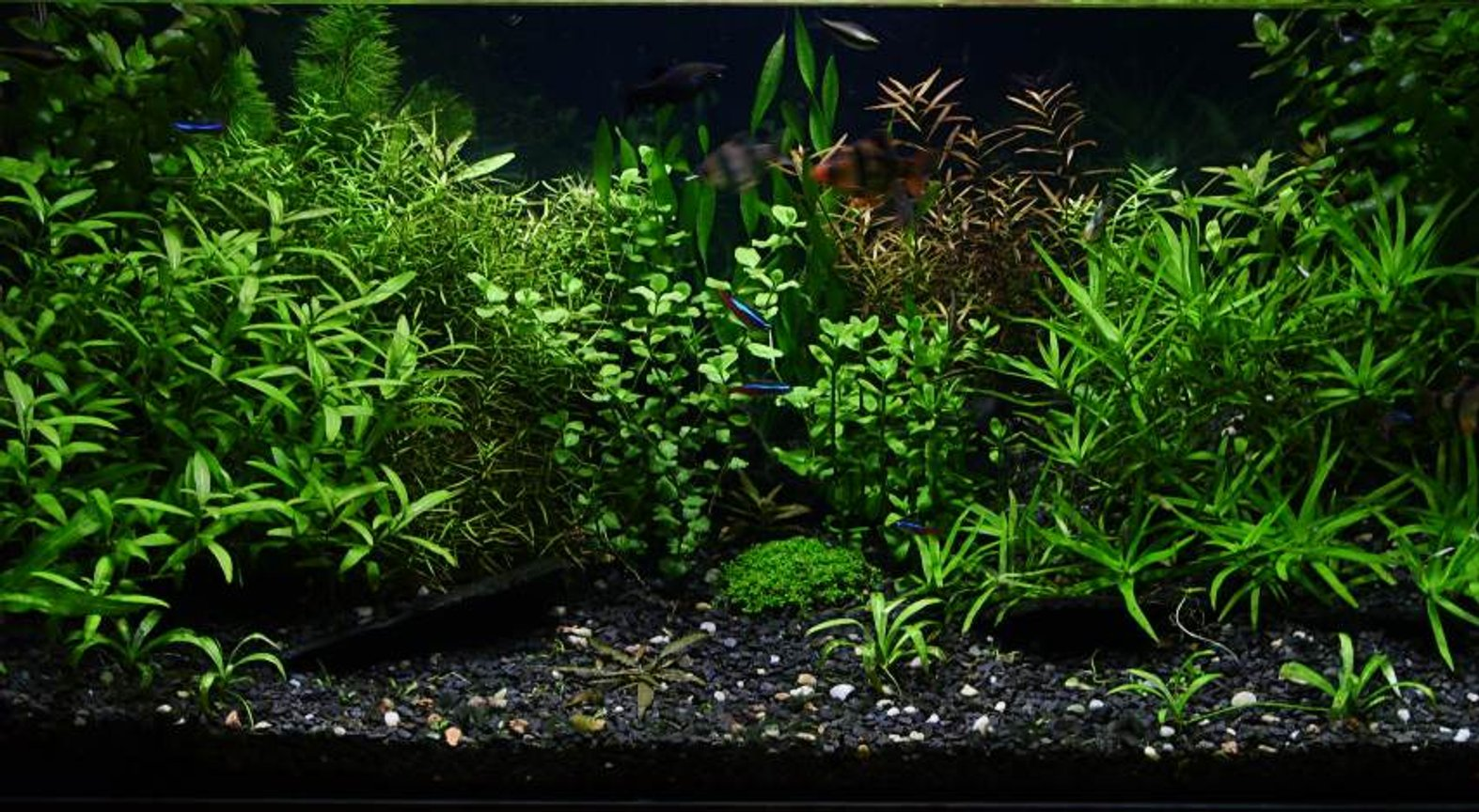 "29 gallons planted tank (mostly live plants and fish) - ""Dream of insane gardener"" bopoco@o2.pl"