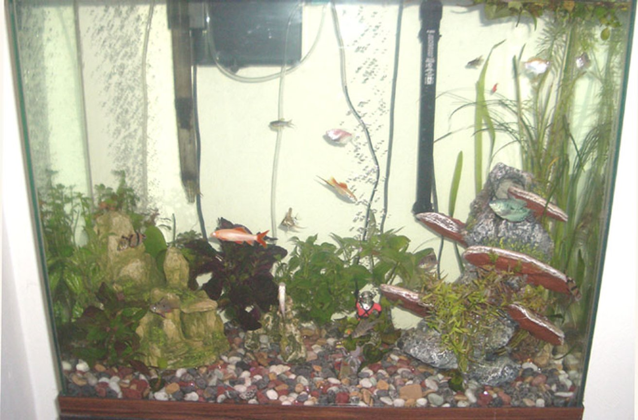 55 gallons planted tank (mostly live plants and fish) - My fish and their plants!