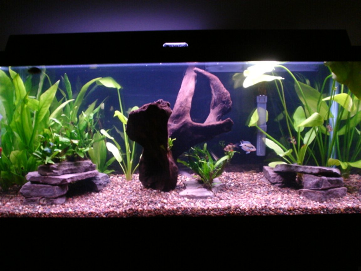 30 gallons planted tank (mostly live plants and fish) - 30 gallon planted tank