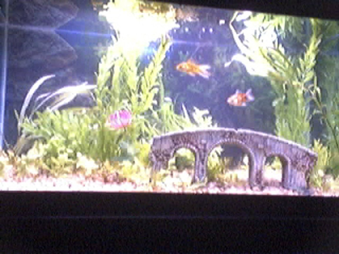 29 gallons planted tank (mostly live plants and fish) - My fish tank!
