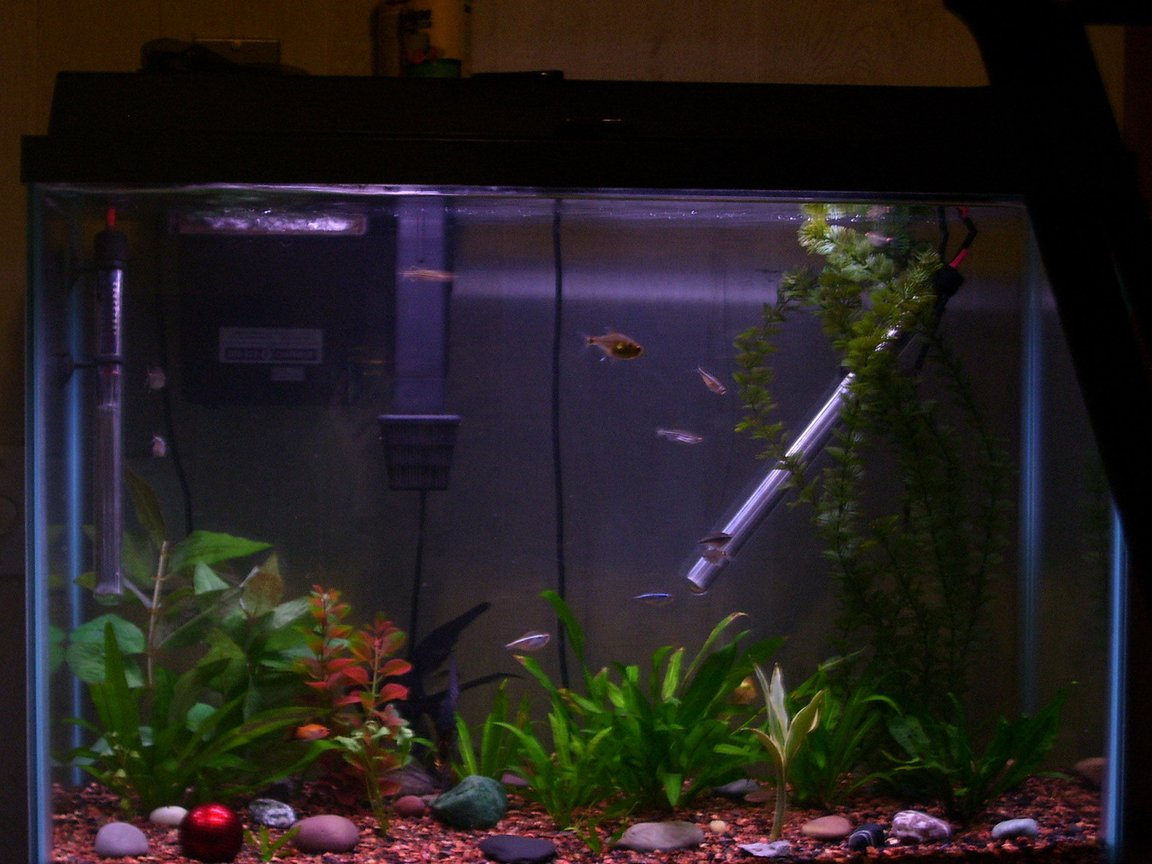 29 gallons planted tank (mostly live plants and fish) - This is my 29 Gal work in progress. We just moved 1 month ago and the tank has only been up for about 6 months. I need to cultivate the plants and work on the aquascape. Notice the red ball is from a microsoft trackball, it made a great decoration. I also have several rock from Lake Eire in the tank which are great and free.