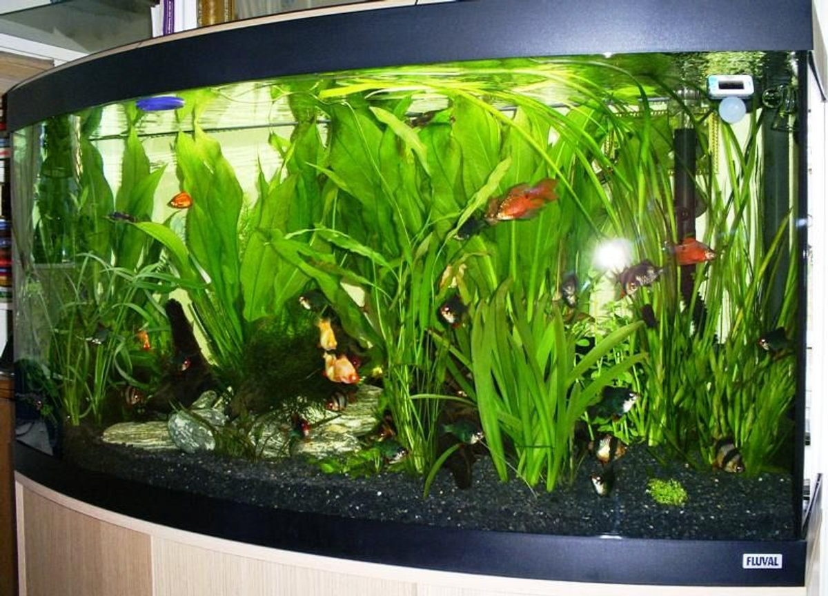 57 gallons planted tank (mostly live plants and fish) - Fluval 260 litre Vicenza planted aquarium