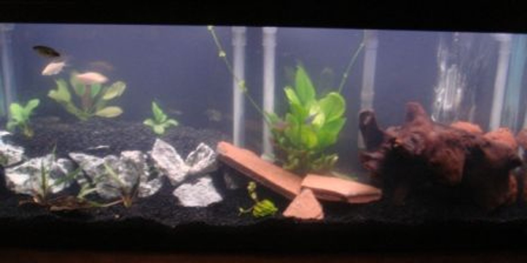 55 gallons planted tank (mostly live plants and fish) - 2 level tank with live plants, please leave me comments on your thoughts for advice