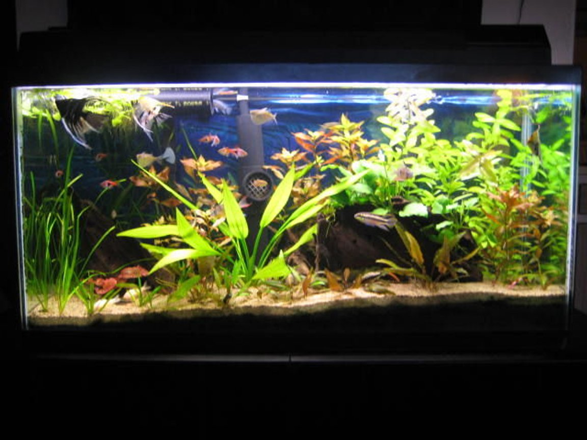 33 gallons planted tank (mostly live plants and fish) - 33 gal Planted Tank