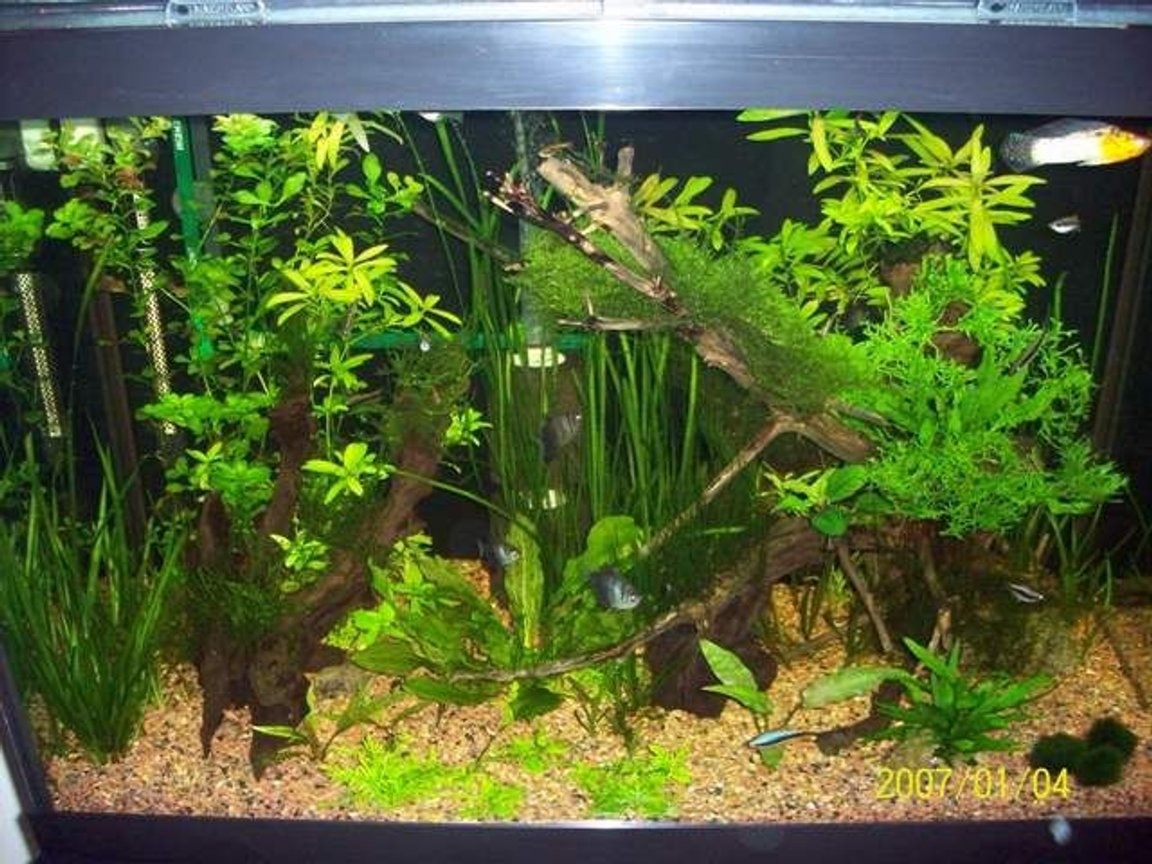 65 gallons planted tank (mostly live plants and fish) - Low light planted