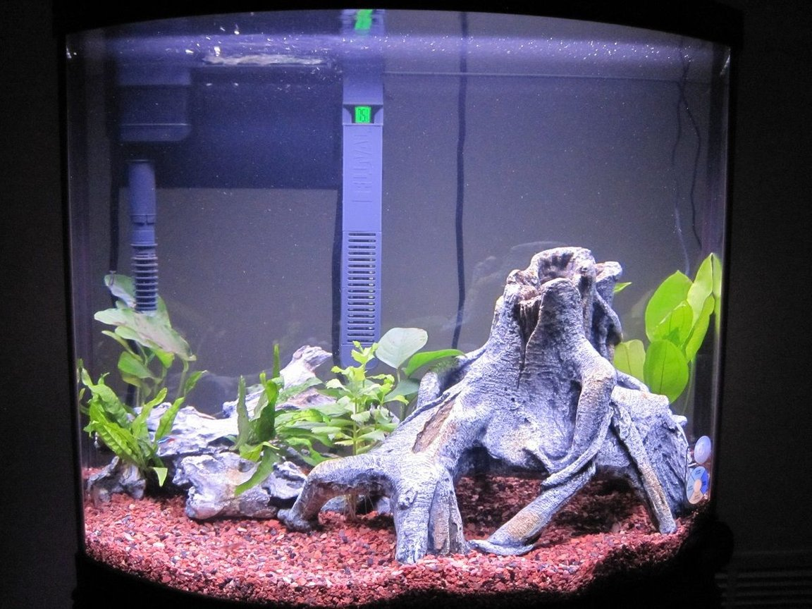 16 gallons planted tank (mostly live plants and fish) - 16G Bow Front 3 Weeks Old