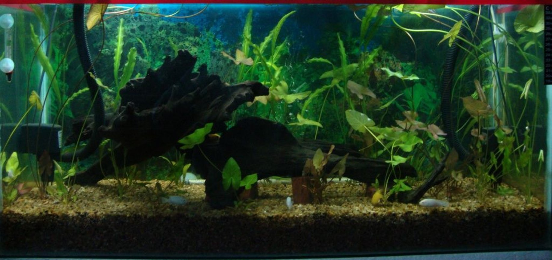 500 gallons planted tank (mostly live plants and fish) - Nature is in living room................