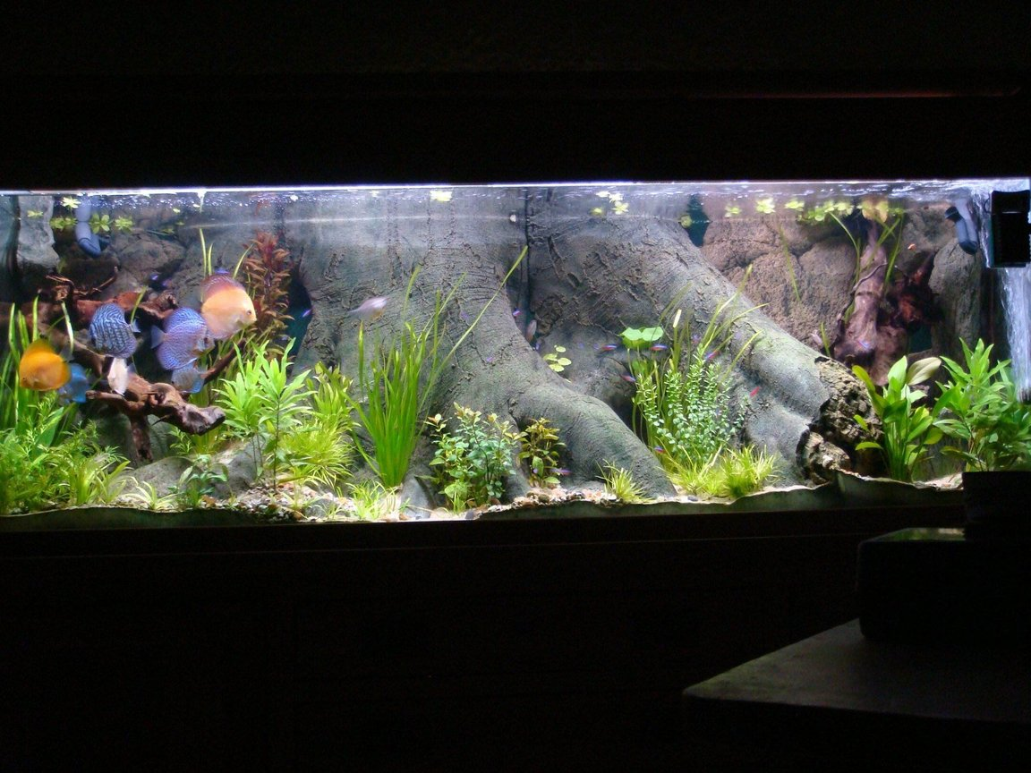 120 gallons planted tank (mostly live plants and fish) - Sea shell tank on solid oak base.