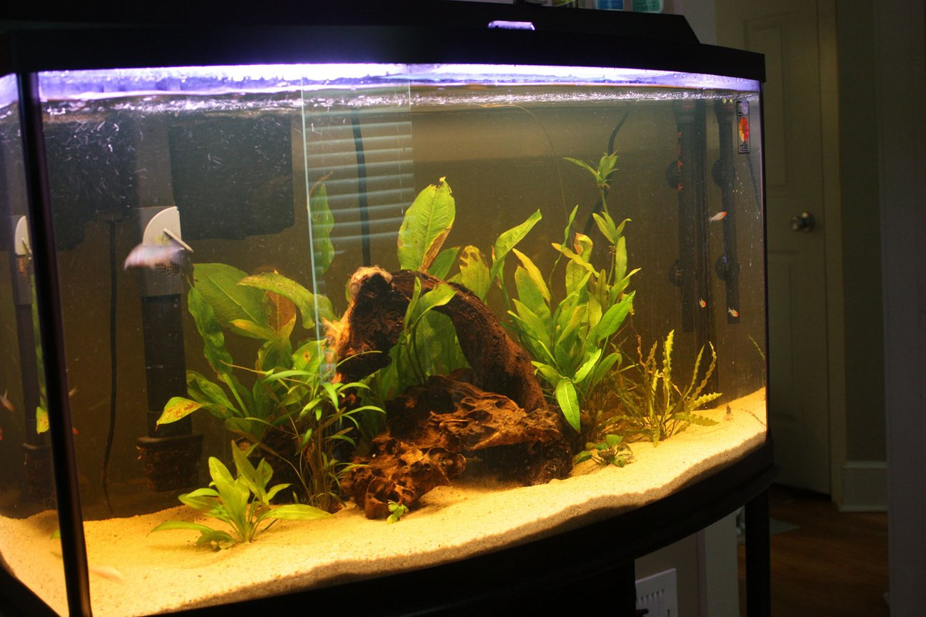 46 gallons planted tank (mostly live plants and fish) - 46