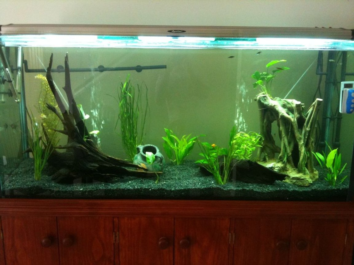 120 gallons planted tank (mostly live plants and fish) - Day view
