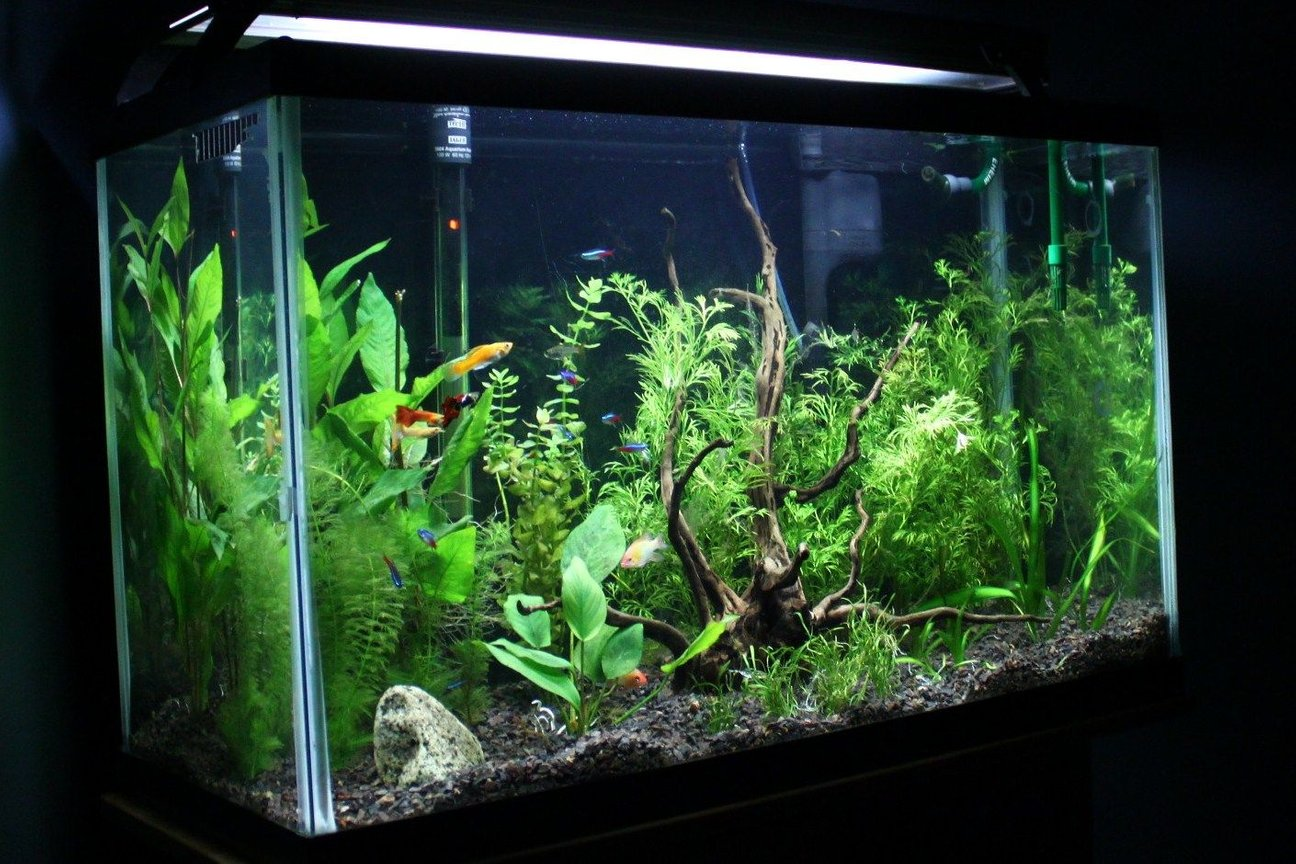 29 gallons planted tank (mostly live plants and fish) - newly scaped tank