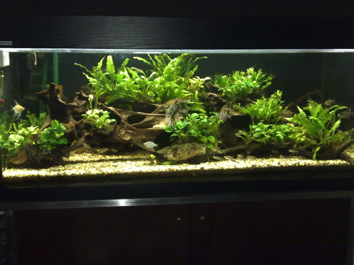 80 gallons planted tank (mostly live plants and fish) - This is my current tank, It is a lower delta tropical pond setting and the plants are all matured for about 3 years now.