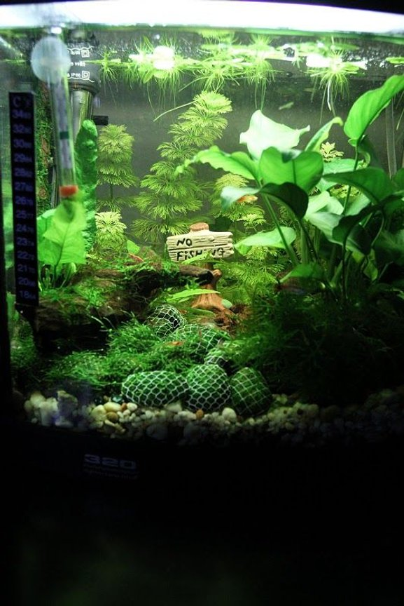 7 gallons planted tank (mostly live plants and fish) - Shrimp Lounge - Red Cherry Shrimp and Guppies