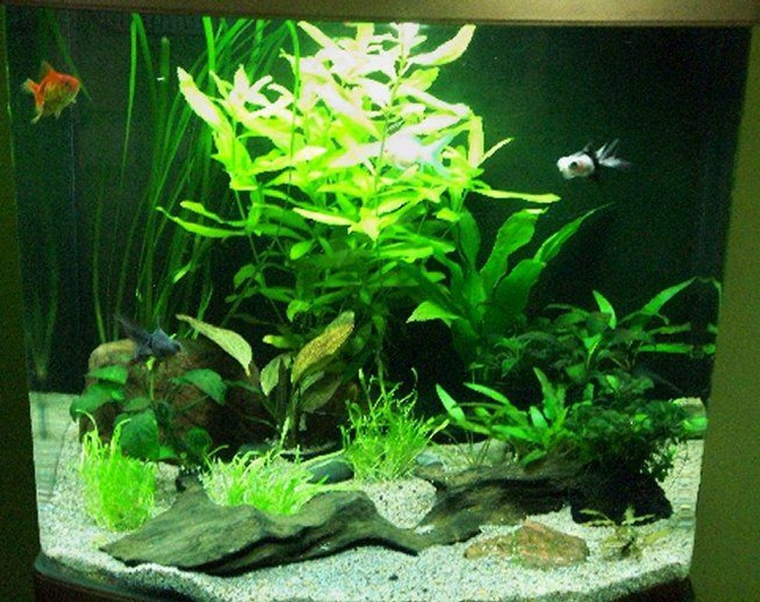 19 gallons planted tank (mostly live plants and fish) - This has been my holiday project, re-designing my fish tank which I have had for about 3 years.