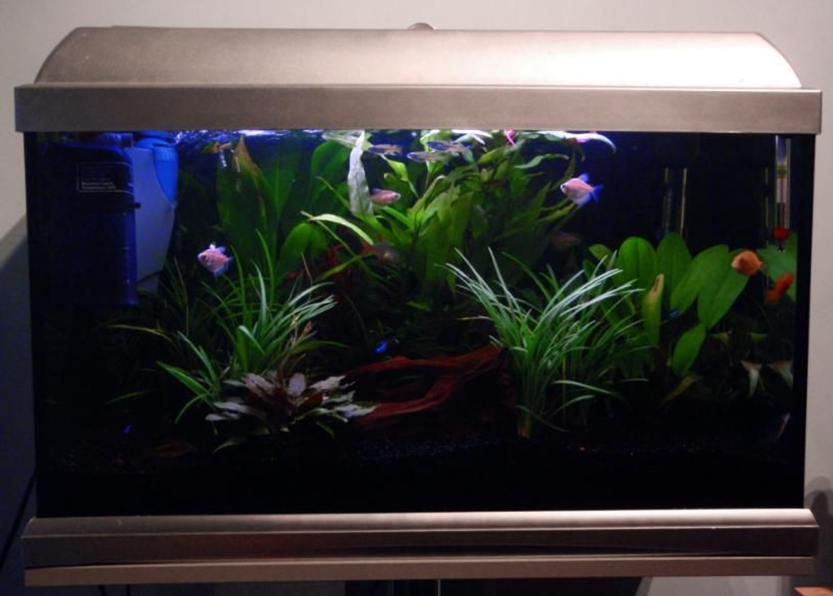 13 gallons planted tank (mostly live plants and fish) - My Tank :)