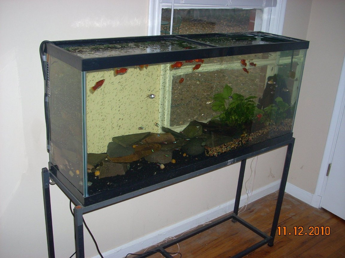 55 gallons planted tank (mostly live plants and fish) - all natural sunlight regulated by blinds & no filtration (regulated by water changes, snails & live plants); 400 watt heater; (2) flexible bubble wands with tubing & air pump (provides water agitation and current); Carib Sea Flora Max with First Layer Pure Laterite for plant side; deep river pebble gravel...wood/pebbles, stone, (live) plants plus natural sunlight creates the perfect ecosystem